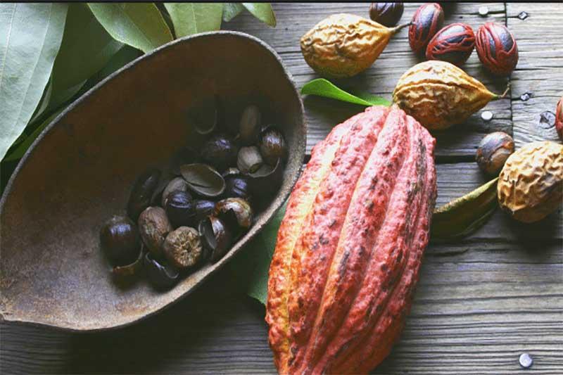Nutmeg plantations in Grenada