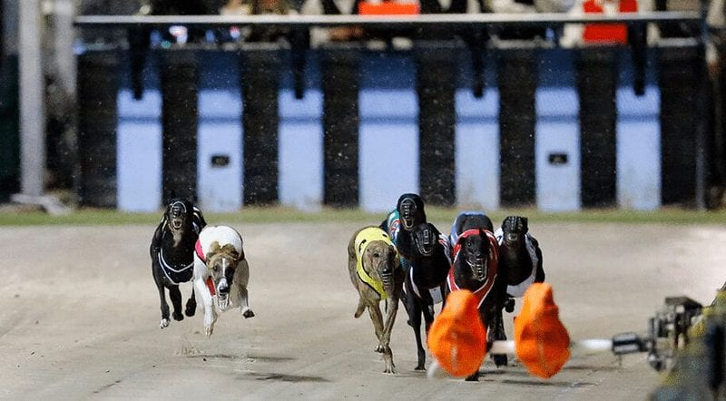 Dog racing betting advice ncaa crack for bet on soldier